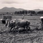 Viet Farmer