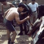 Deer was shot from Helo between Dak To and Kham