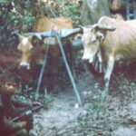The ox cart has mine making implements, We captured two NVA and three VC. Prisoner snatch mission. B-53 Vietnam.